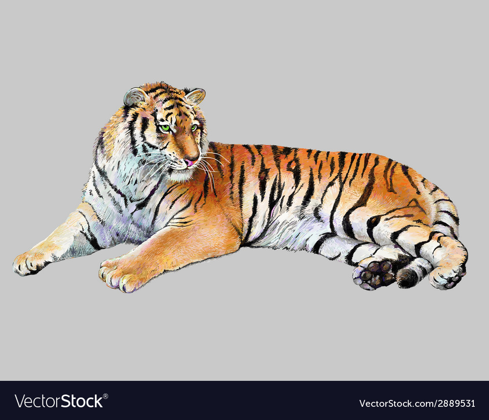 Drawing realistic of tiger vector | Price: 3 Credit (USD $3)