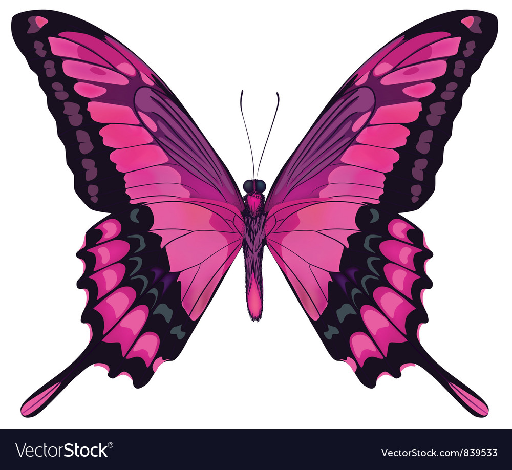 Beautiful pink butterfly vector | Price: 1 Credit (USD $1)