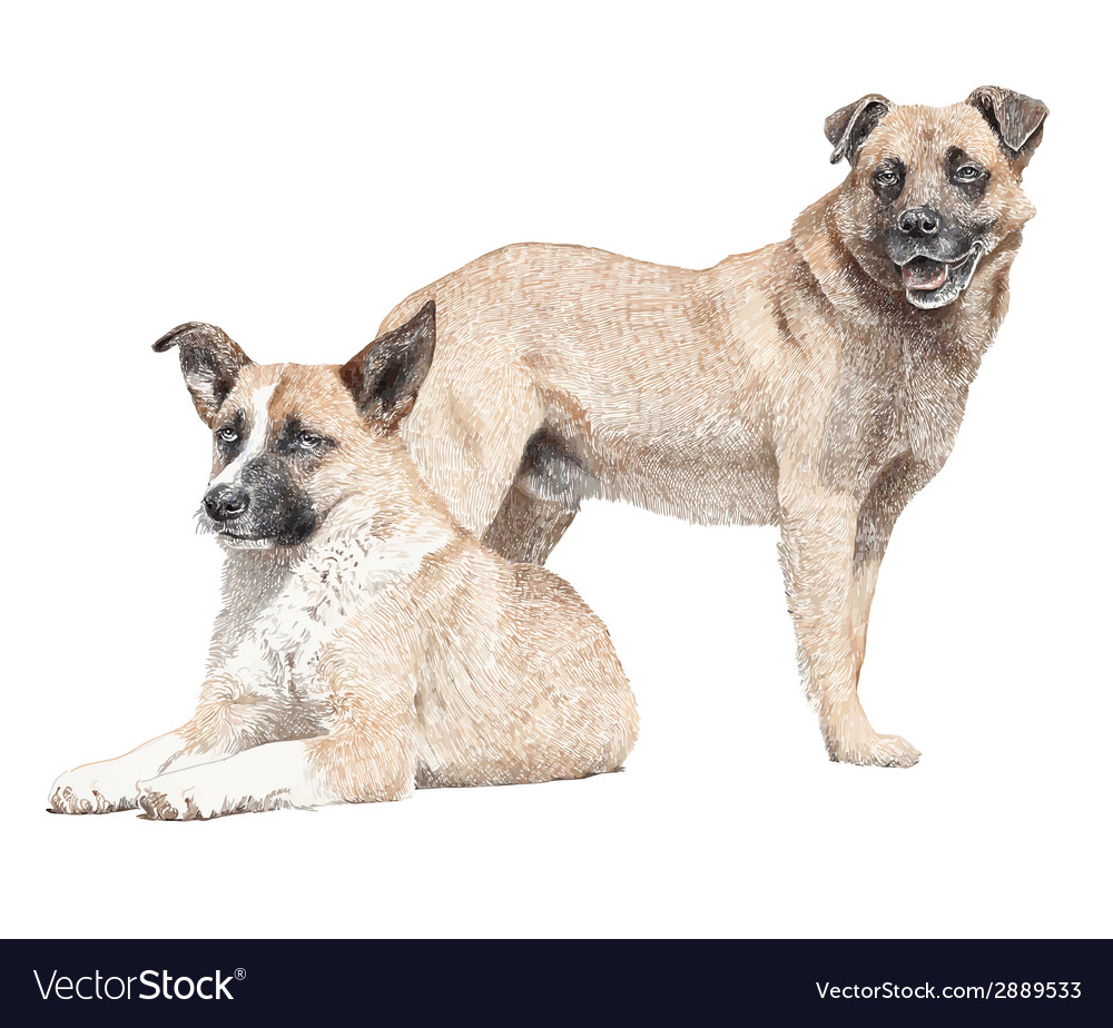 Drawing of two dogs vector | Price: 3 Credit (USD $3)
