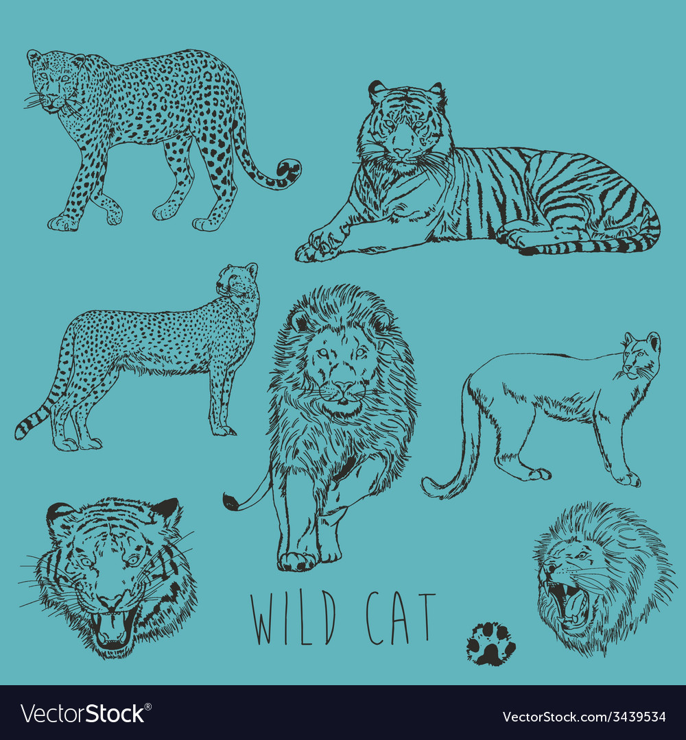 Wild cat marker sketch collection vector | Price: 1 Credit (USD $1)