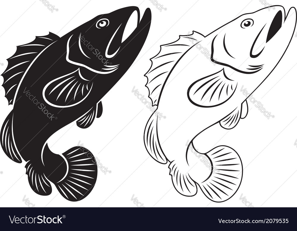 Grouper vector | Price: 1 Credit (USD $1)