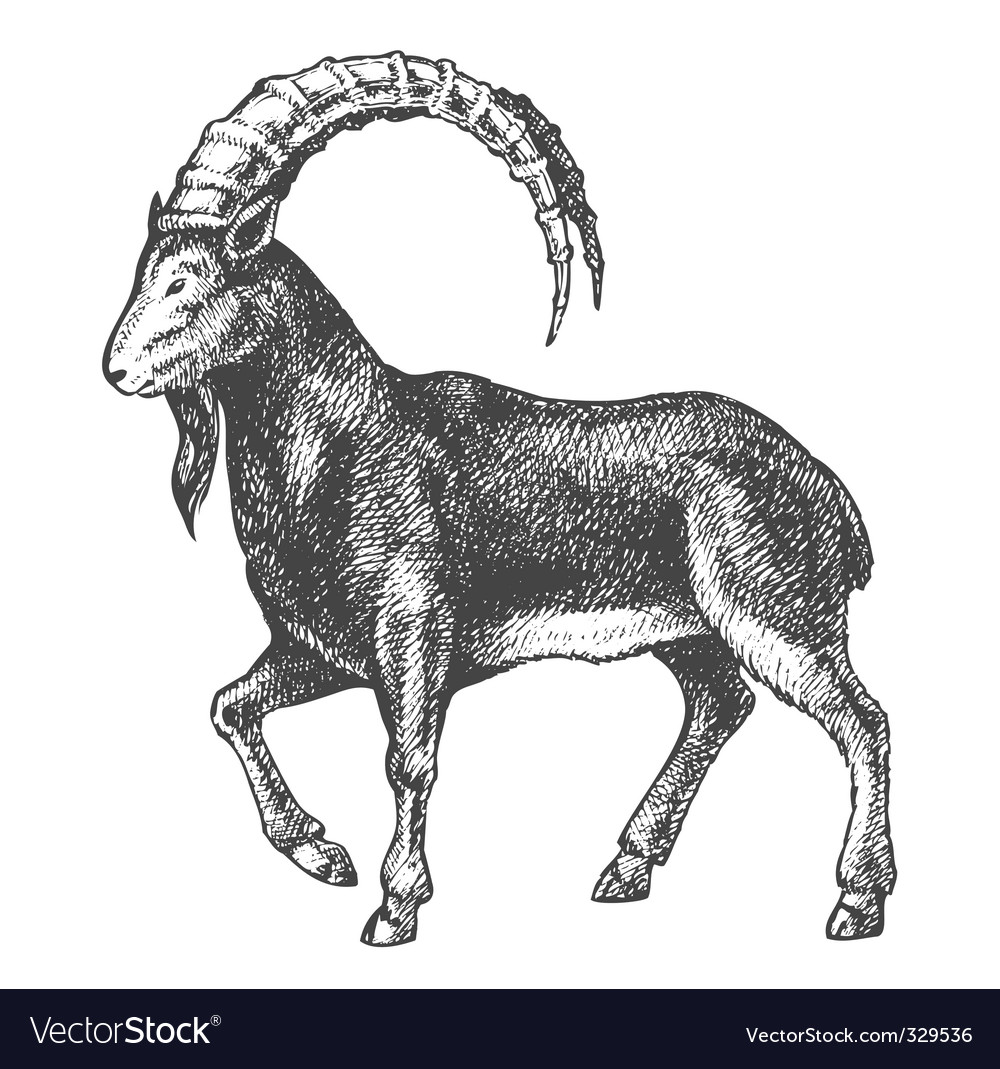 Goat drawing vector | Price: 1 Credit (USD $1)