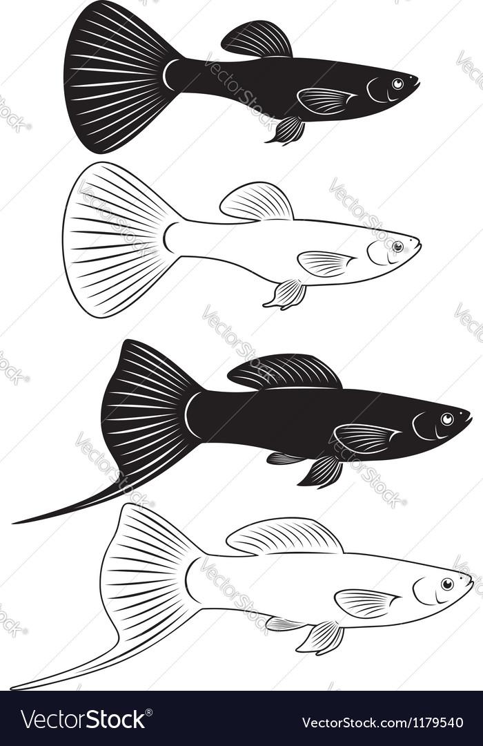 Aquarium fish vector   Price: 1 Credit (USD $1)