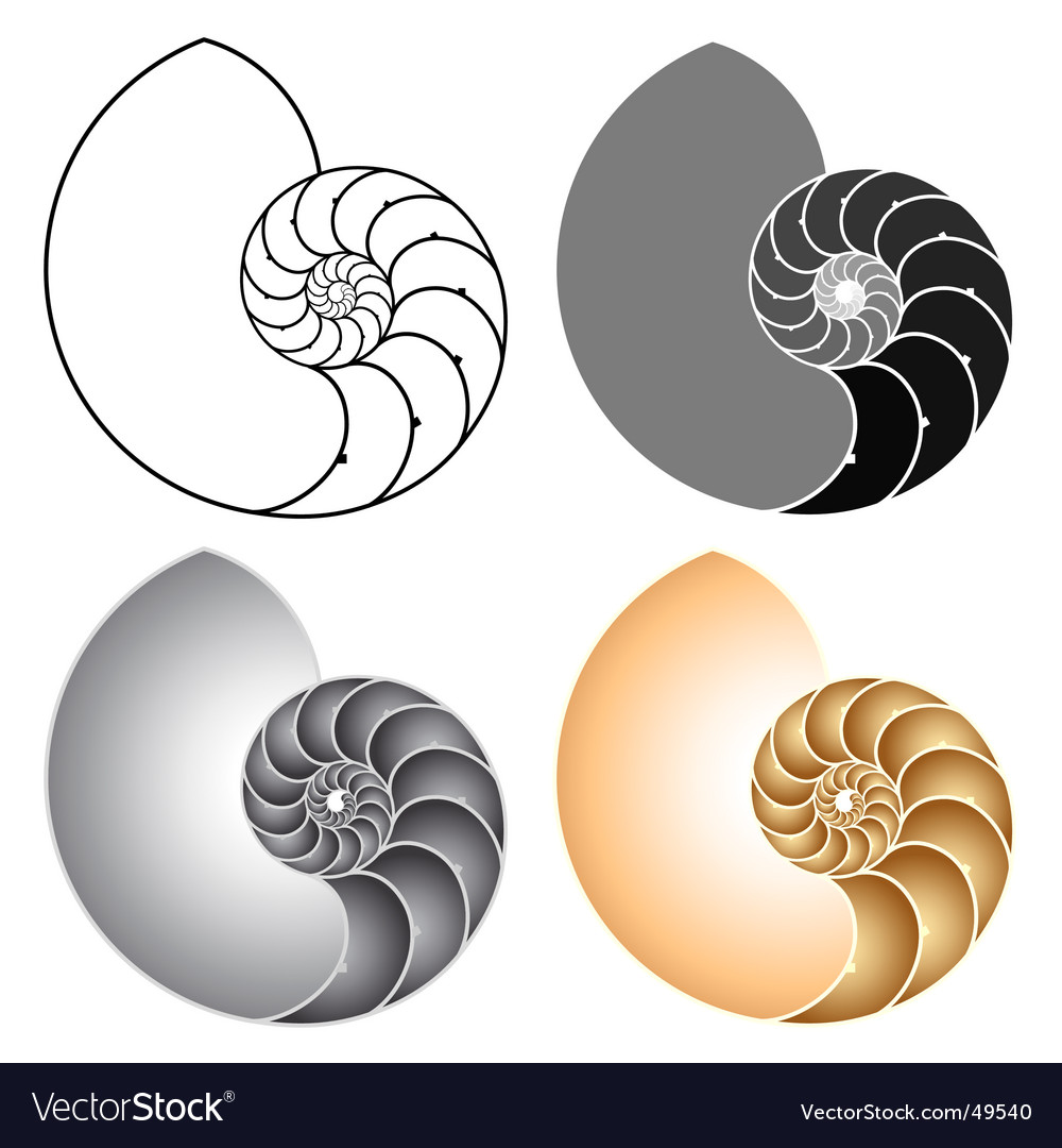 Nautilus vector | Price: 1 Credit (USD $1)