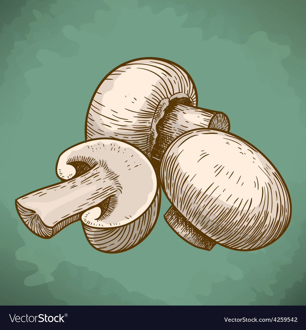 Engraving tree champignons retro vector | Price: 1 Credit (USD $1)