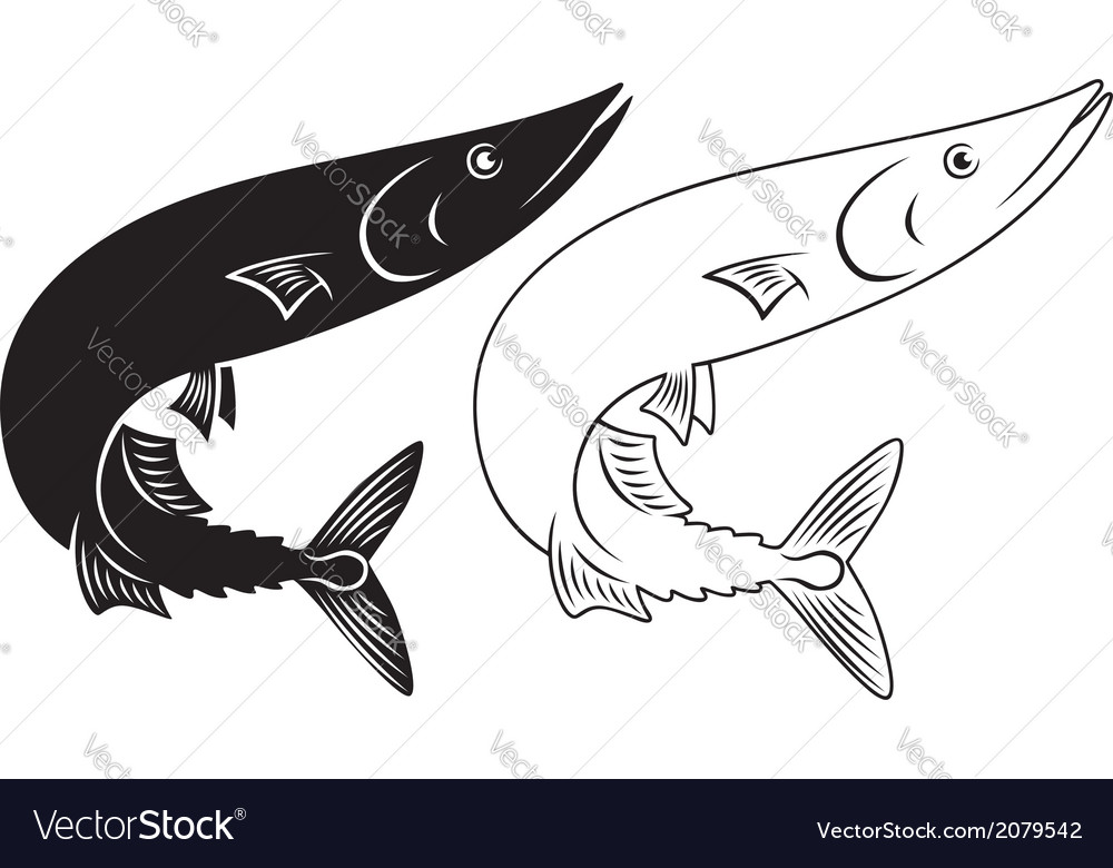 Saury vector | Price: 1 Credit (USD $1)