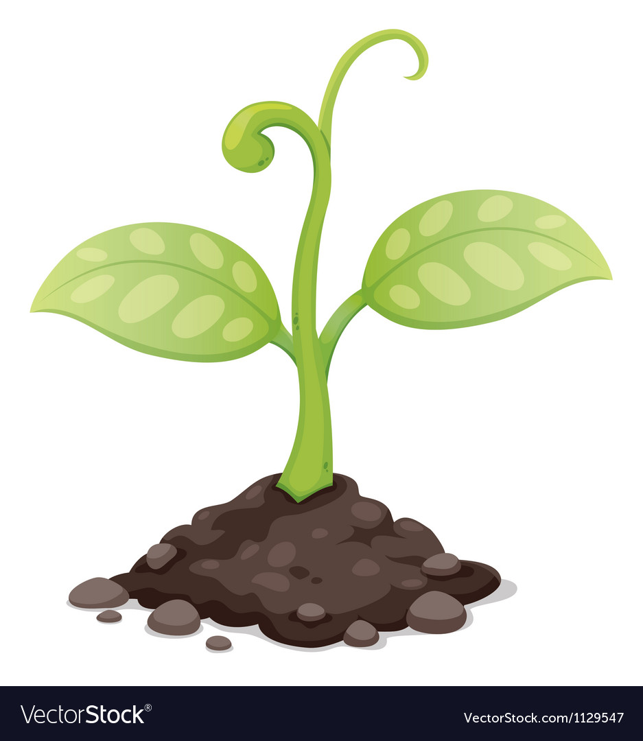 Plant vector | Price: 1 Credit (USD $1)