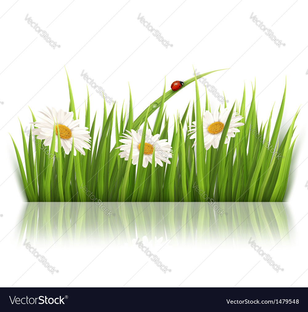 Nature background with green grass and flowers vector | Price: 1 Credit (USD $1)