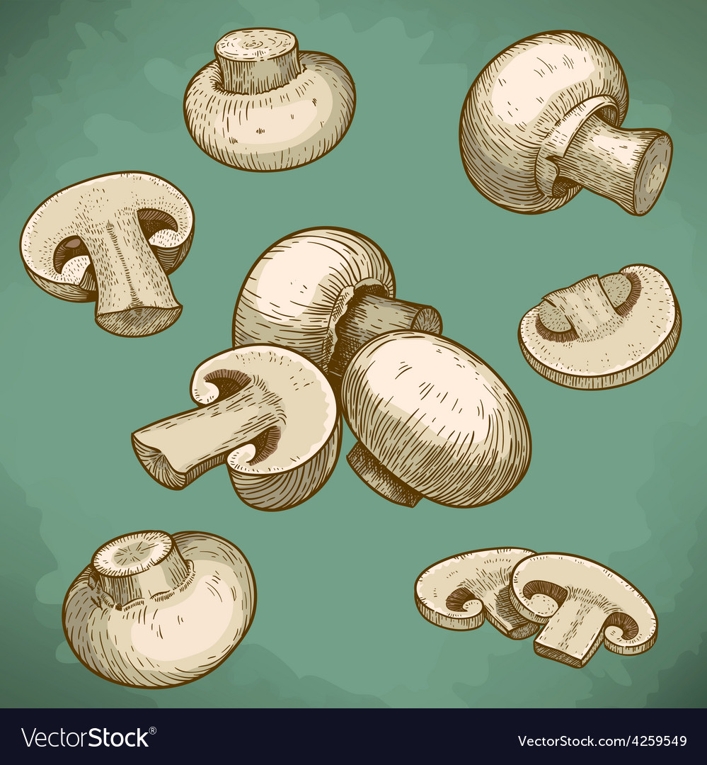 Engraving champignons set retro vector | Price: 1 Credit (USD $1)