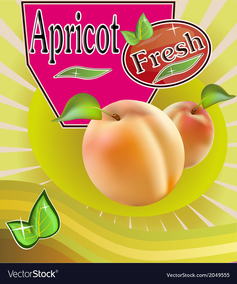 Fresh apricot juice banner vector | Price: 1 Credit (USD $1)