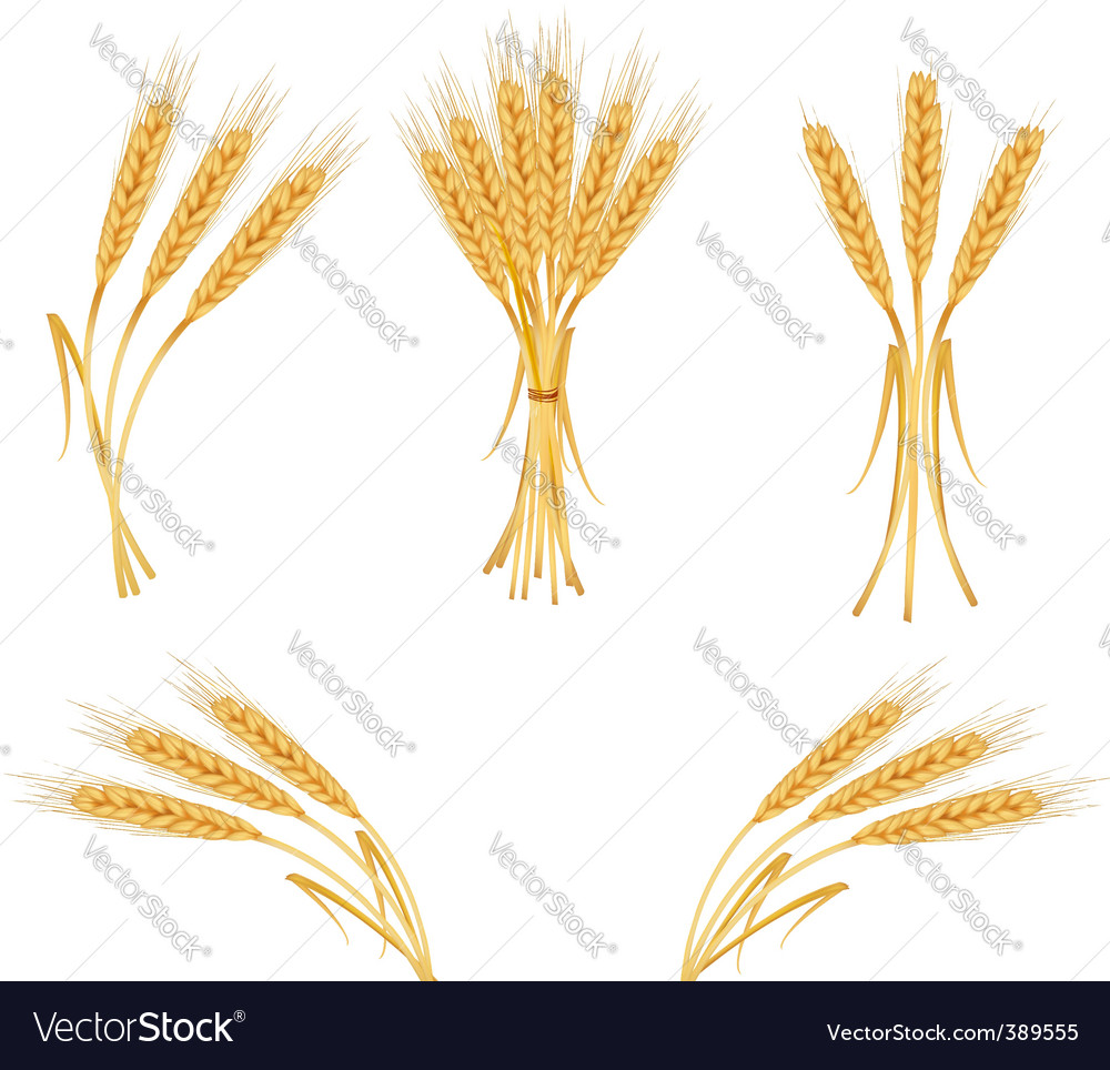 Wheat harvest vector | Price: 1 Credit (USD $1)
