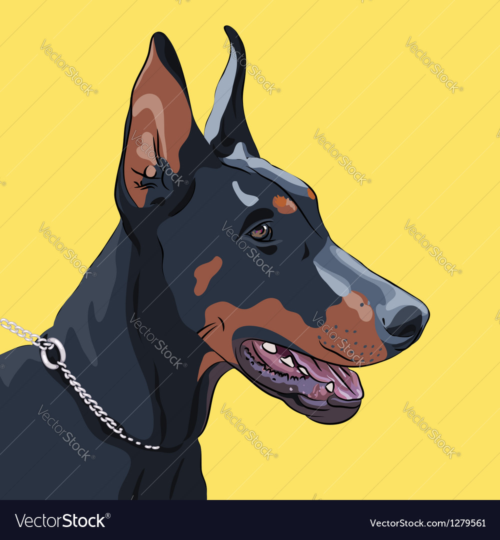 Dog doberman pinscher vector | Price: 1 Credit (USD $1)