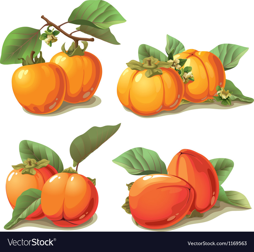 Set of ripe persimmon vector | Price: 5 Credit (USD $5)