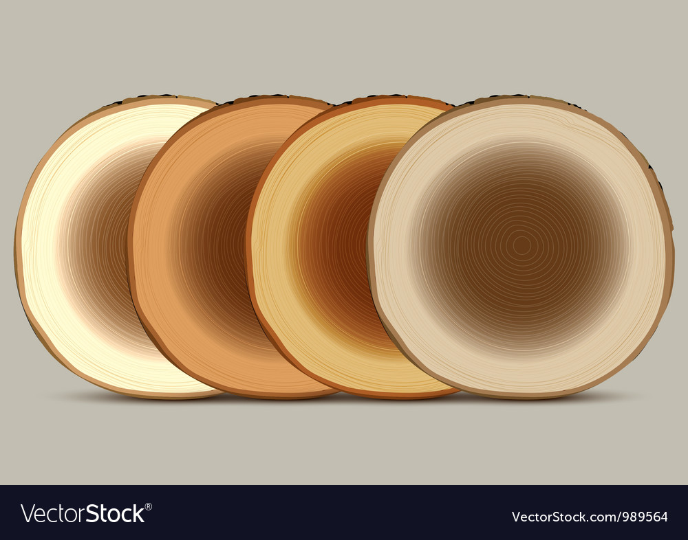 Various cross section of tree stump vector | Price: 1 Credit (USD $1)