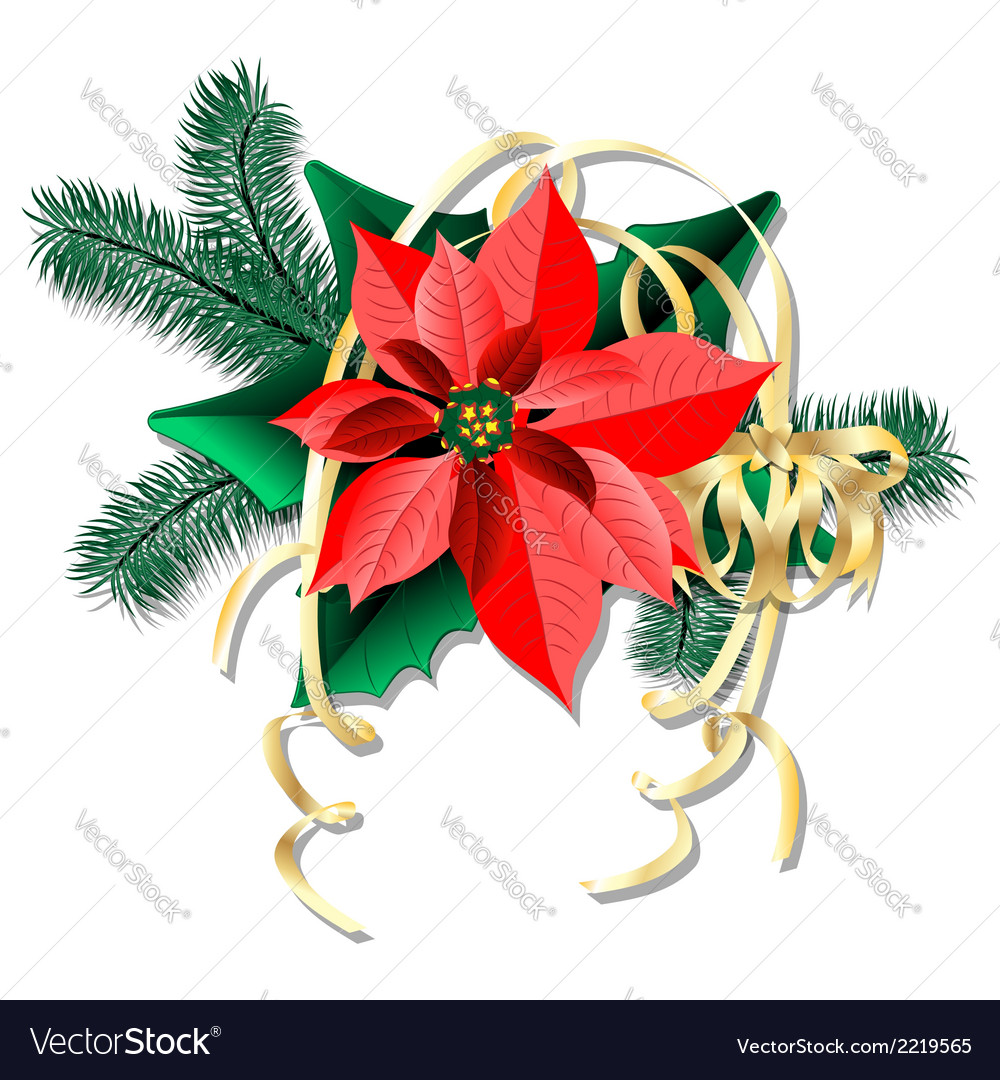 Flower puasettiya and spruce branches with vector | Price: 1 Credit (USD $1)
