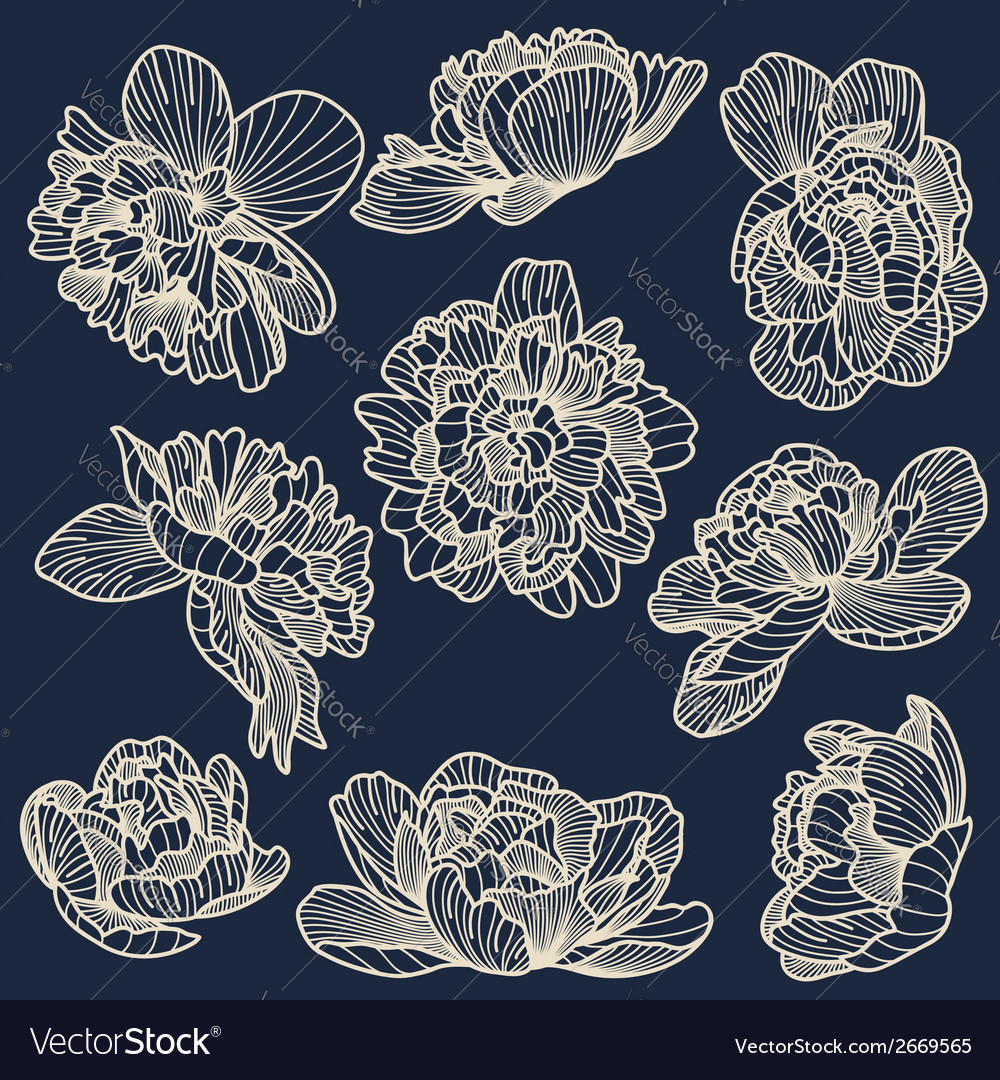Peony drawings set vector | Price: 1 Credit (USD $1)