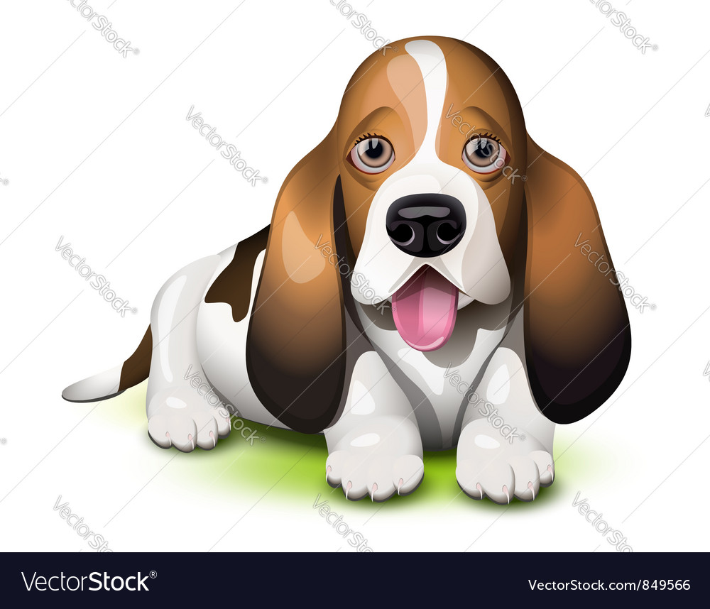 Basset hound puppy vector | Price: 1 Credit (USD $1)