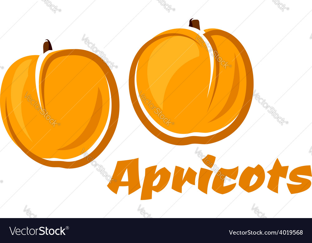 Aroma orange apricot fruits poster vector | Price: 1 Credit (USD $1)