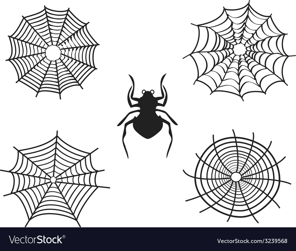 Spider net vector | Price: 1 Credit (USD $1)