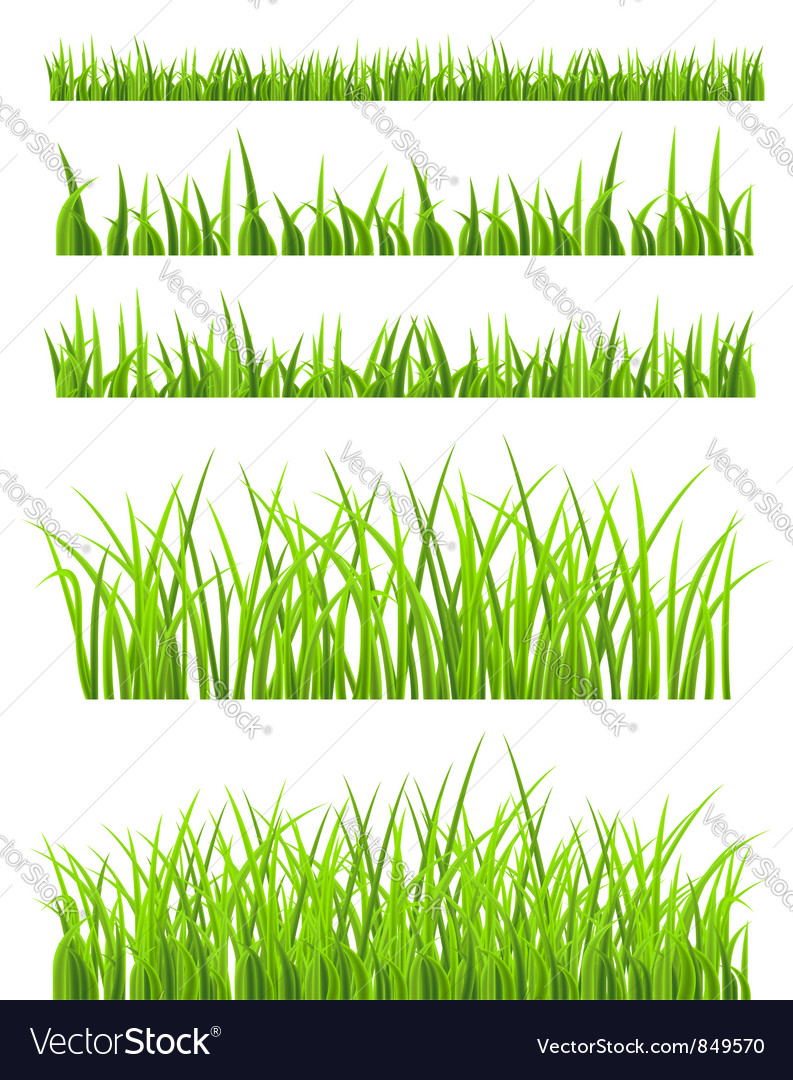 Green grass vector | Price: 1 Credit (USD $1)