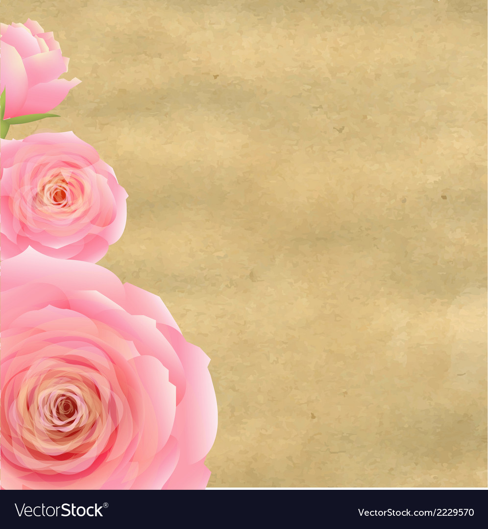 Pink rose with old paper vector | Price: 1 Credit (USD $1)