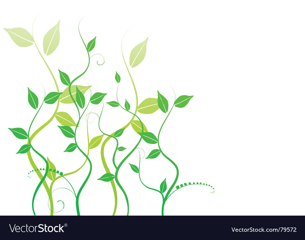 Leafy vine vector | Price: 1 Credit (USD $1)