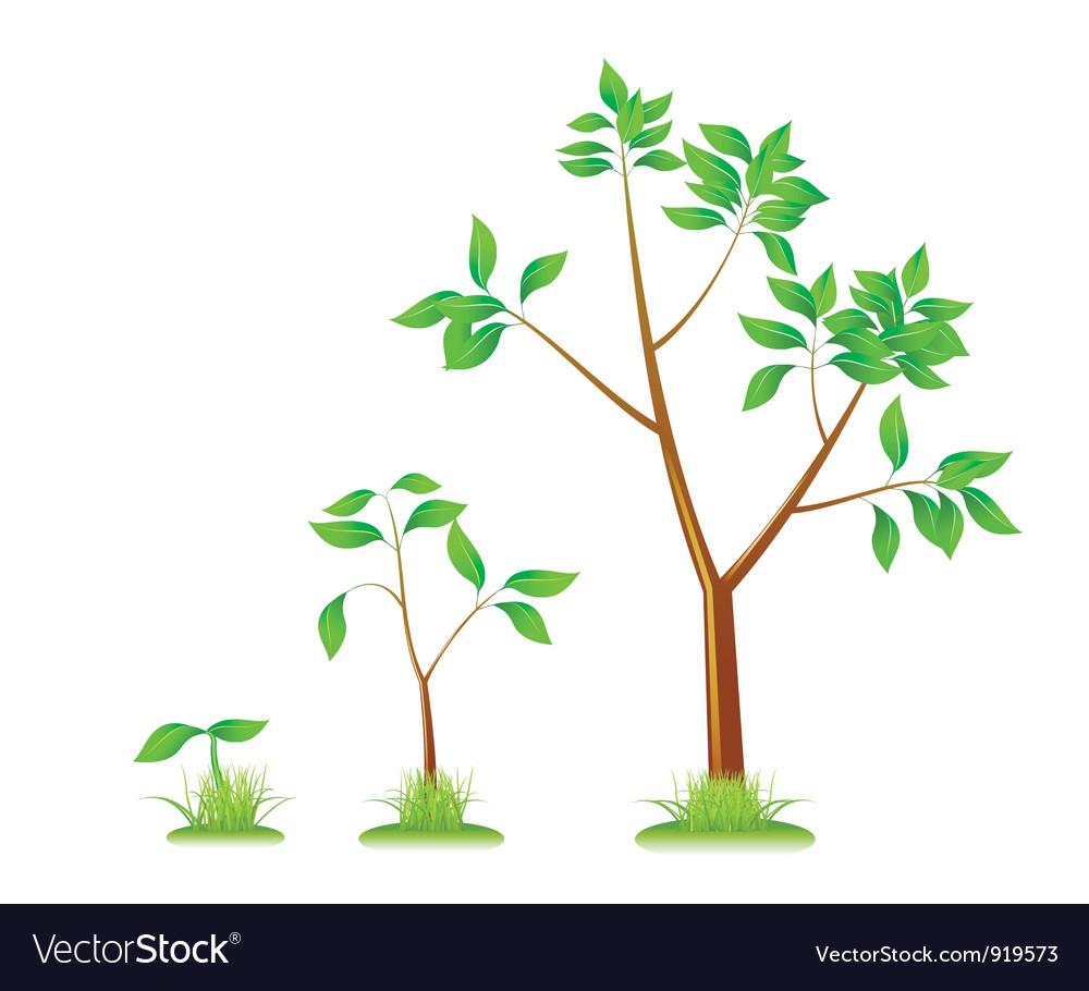 Plants vector | Price: 3 Credit (USD $3)
