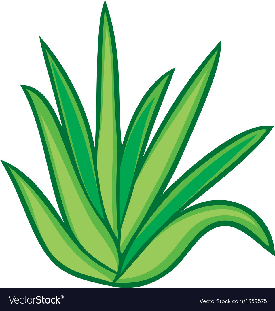 Aloe vera plant vector | Price: 1 Credit (USD $1)