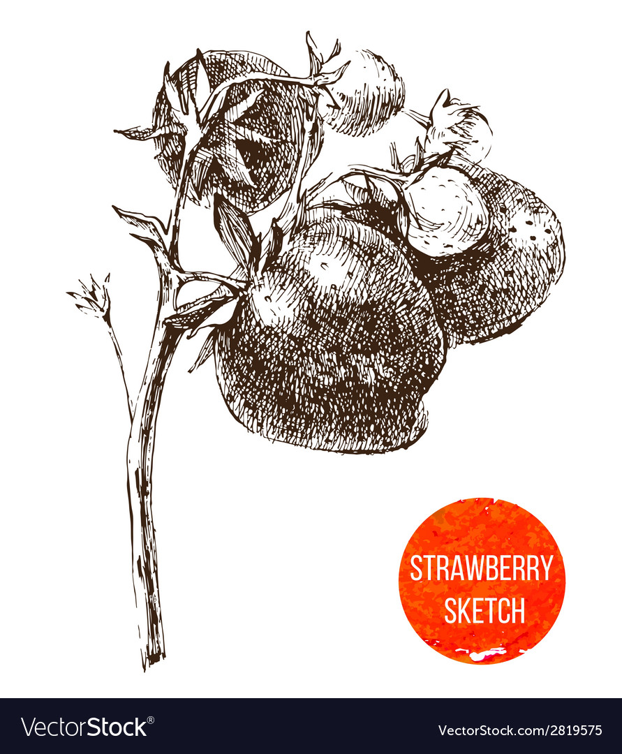 Hand drawn strawberry vector | Price: 1 Credit (USD $1)