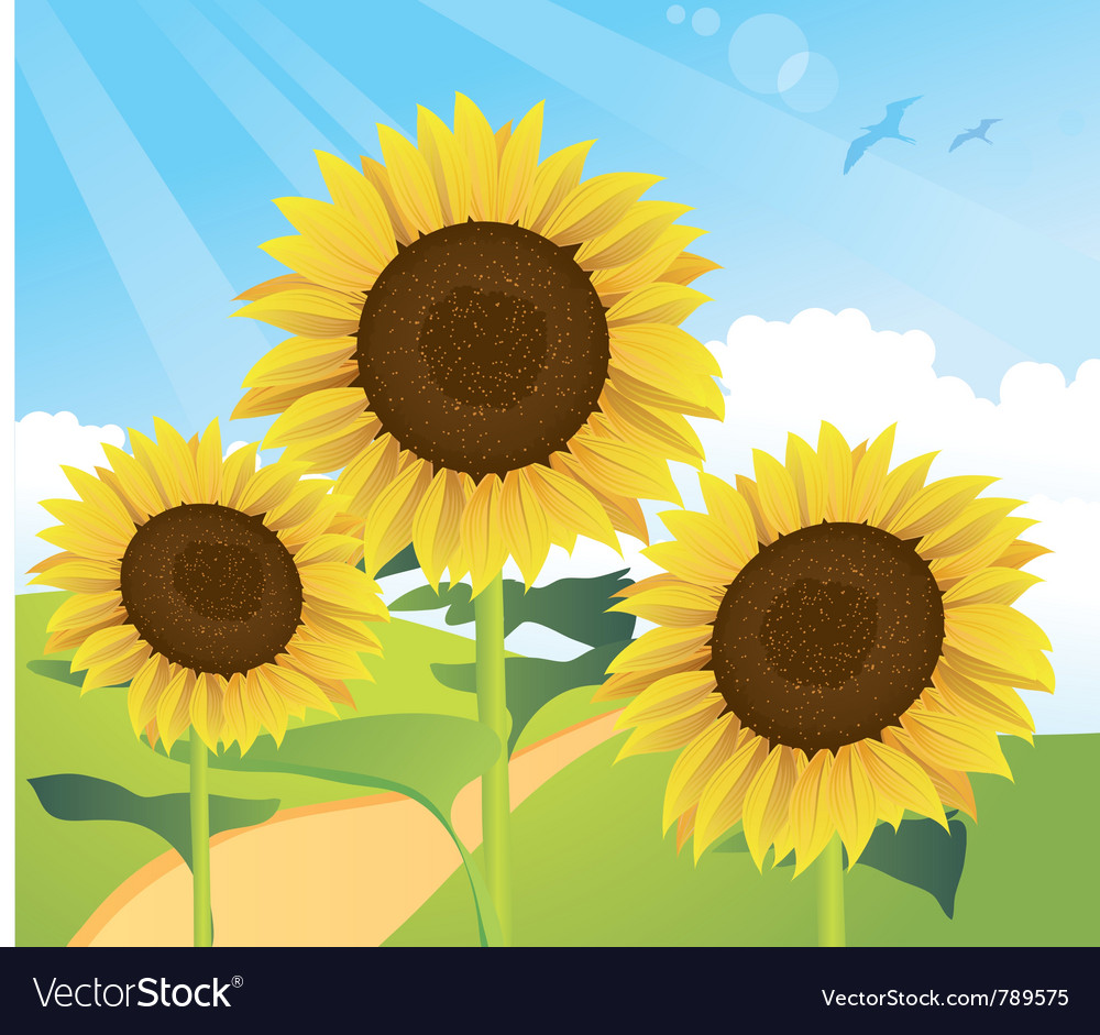 Sunflower landscape vector | Price: 3 Credit (USD $3)
