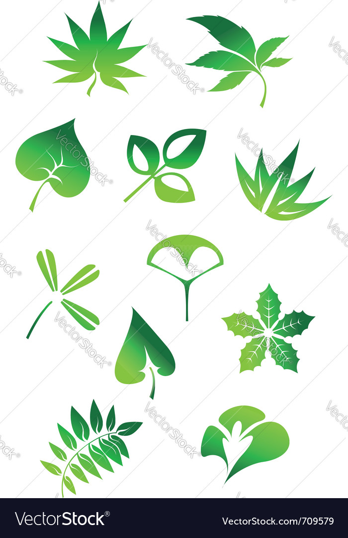 Nature leaves vector | Price: 1 Credit (USD $1)