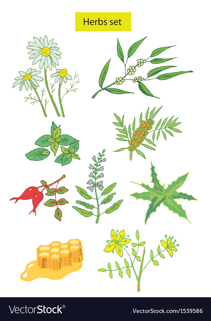 Herbs set detailed vector | Price: 1 Credit (USD $1)