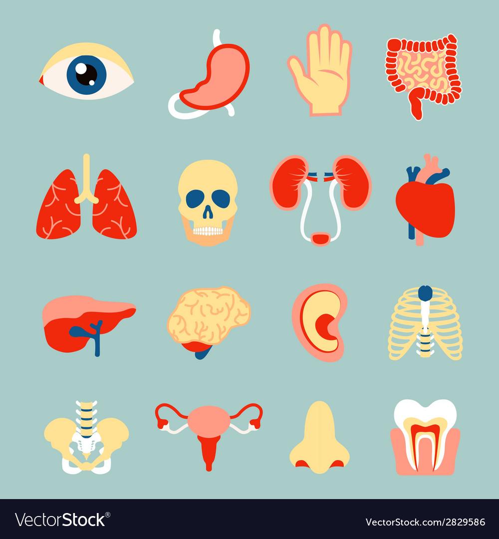 Human organs set vector | Price: 1 Credit (USD $1)