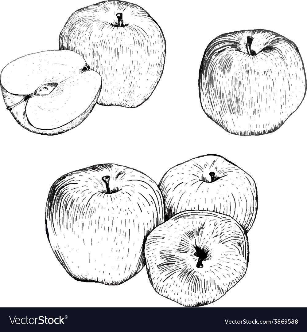 Ink apple sketches set vector   Price: 1 Credit (USD $1)