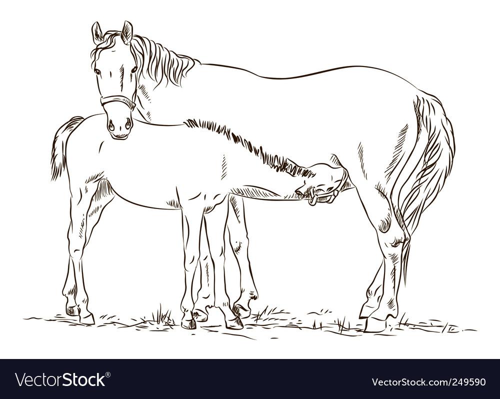 Horses vector   Price: 1 Credit (USD $1)