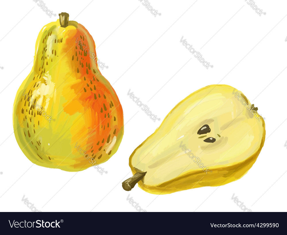 Picture of pear vector   Price: 3 Credit (USD $3)
