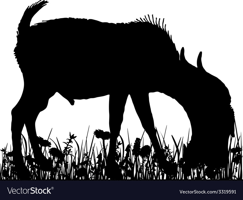 Billy goat in the meadow vector | Price: 1 Credit (USD $1)