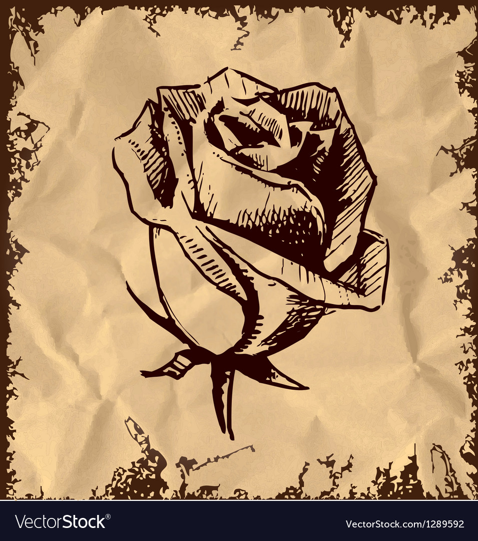 Vintage rose bud sketch vector | Price: 1 Credit (USD $1)