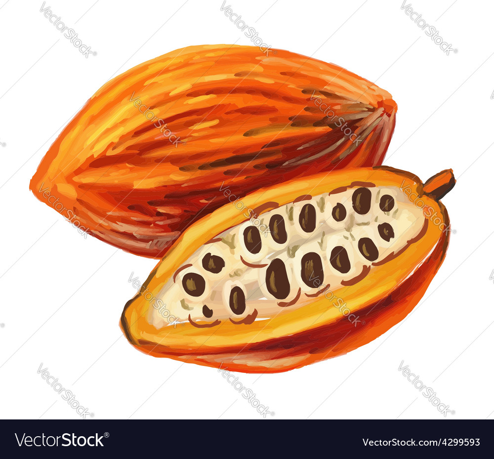 Picture of cacao vector | Price: 3 Credit (USD $3)