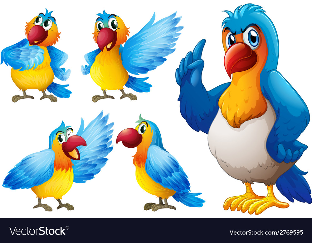 Parrot set vector | Price: 1 Credit (USD $1)