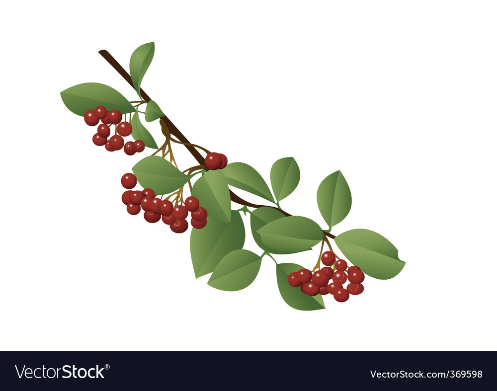 Red berries vector | Price: 1 Credit (USD $1)