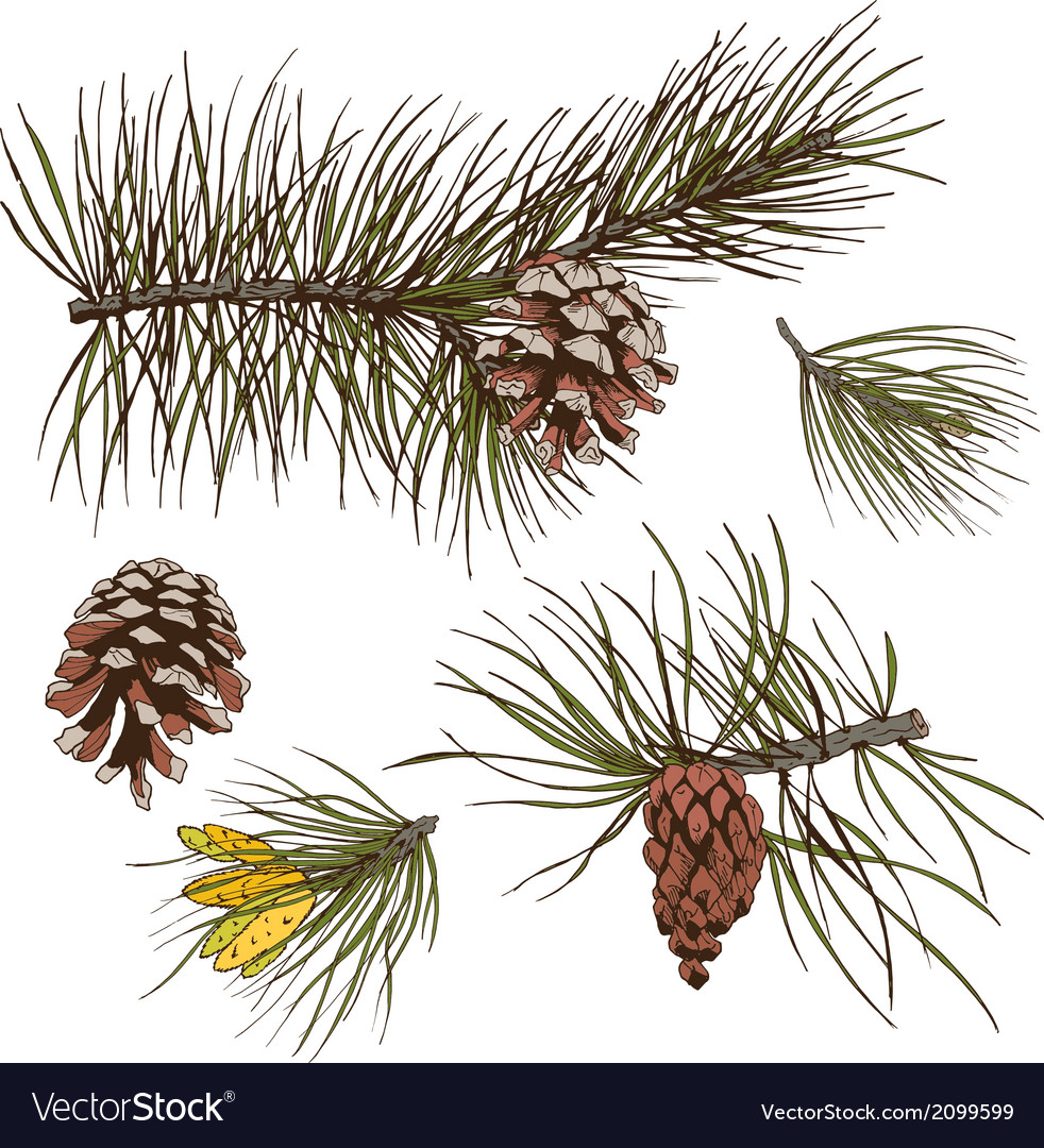 Pine branches colored print vector | Price: 1 Credit (USD $1)