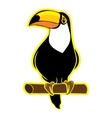 Bird toucan on a white background vector