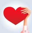 Female hand holding deep red heart vector