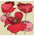Poppy flowers vector