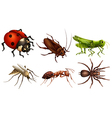 Different insects vector