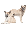 Drawing of two dogs vector