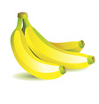 Bunch with bananas vector