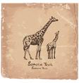 Art giraffe vector