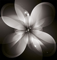 Star flower vector